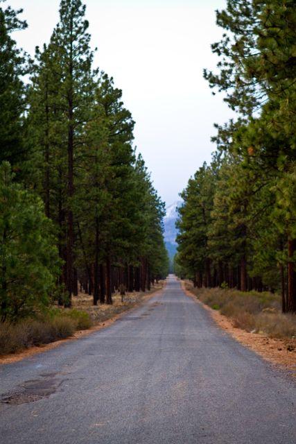Cherish Road