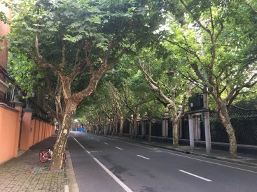 French Concession neighborhood, Shanghai. Very empty with little traffic, perhaps because it is summer.