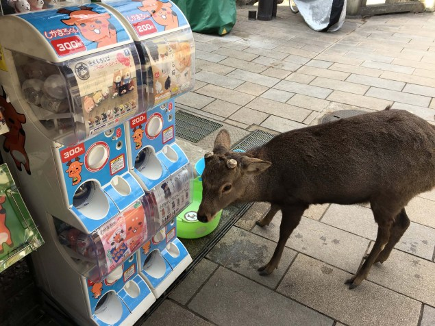 The deer of Nara