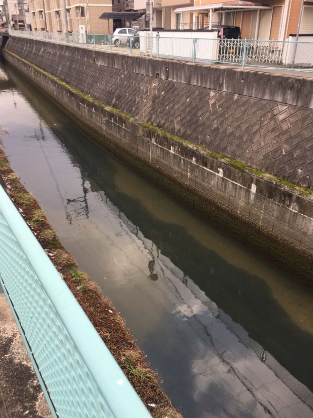 The dark spots are fish in the canal.