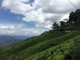 View of Munnar tea plantations. One of the most beautiful places our Asia trip has taken us.