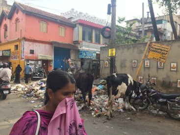 Cows munching away on some street snacks.