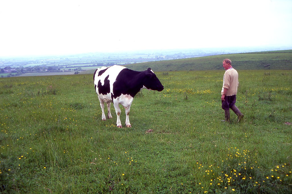 A farmer with one of his cows, Wiltshire