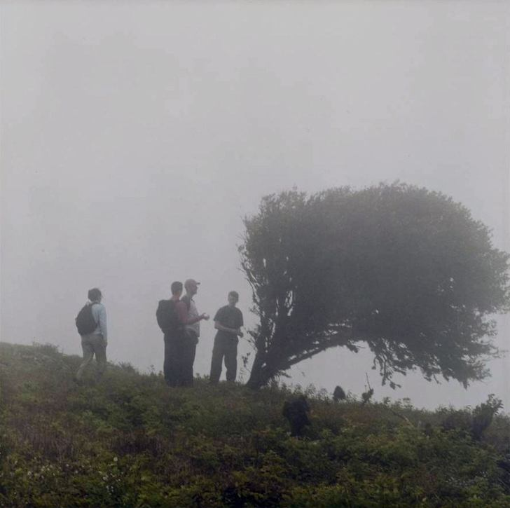 Tree in Fog - 2005 - 10 x 10 - Chromogenic Print