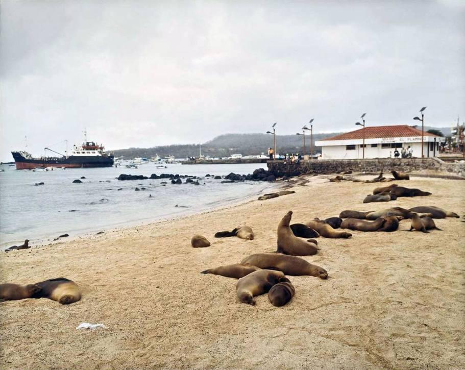 Sealions on the Beach - 2005 - 20 x 24 - Chromogenic Print