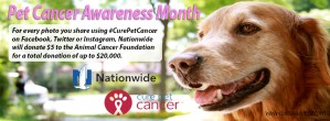 pet cancer - Ark Naturals