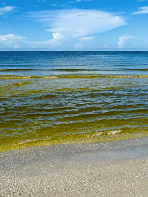 Red tide brevetoxin