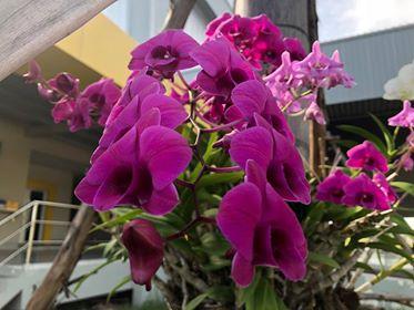 Fuschia/purple orchid.