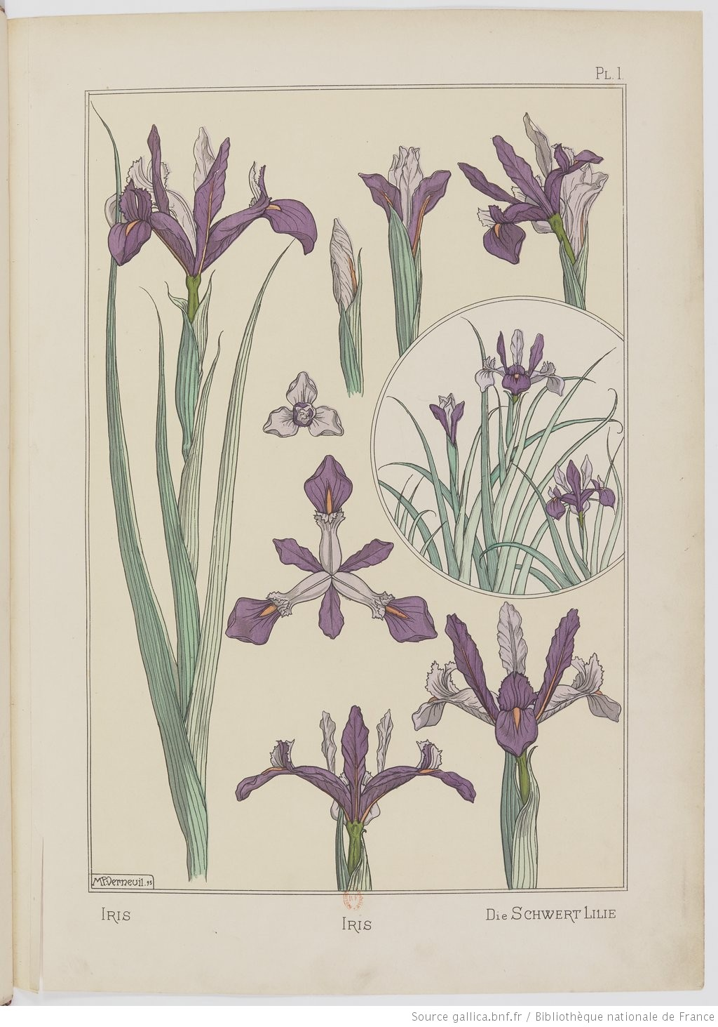 """""""The sword lily."""" Plate I. Image 17."""