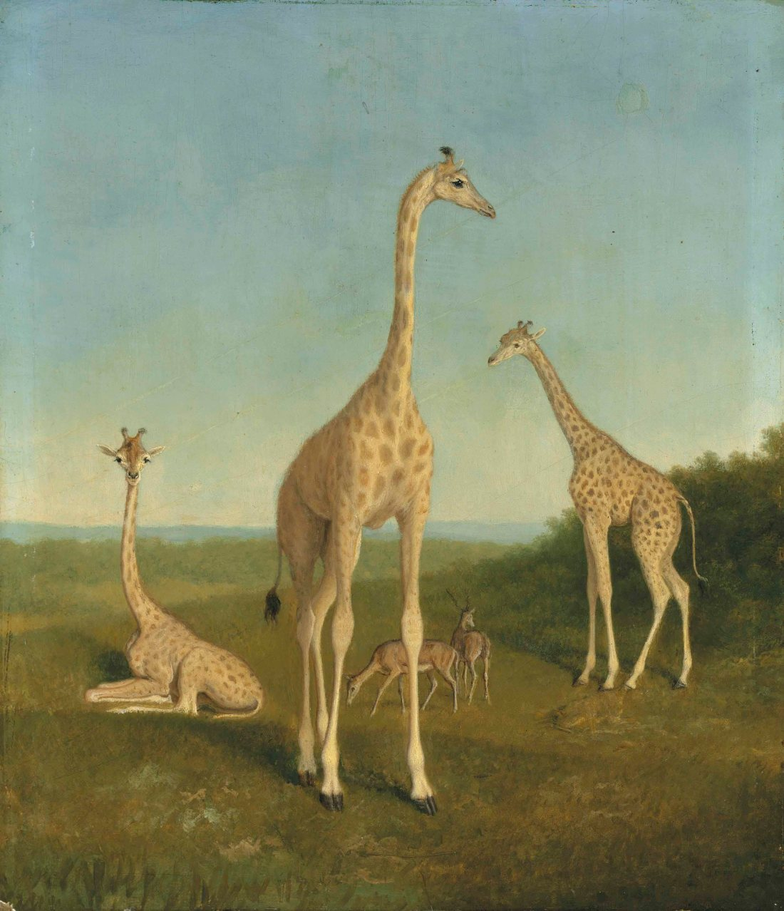 """""""Giraffes with impala in a landscape."""" No date."""