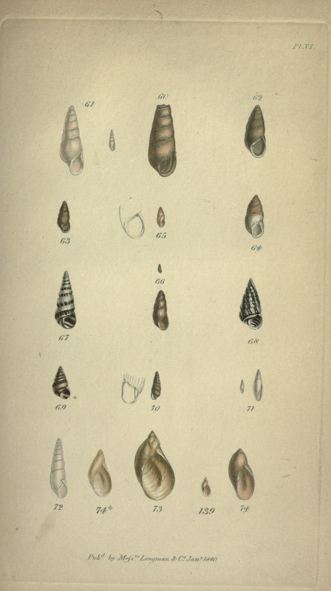 Plate VI, figures 61 through 74. Page 337.