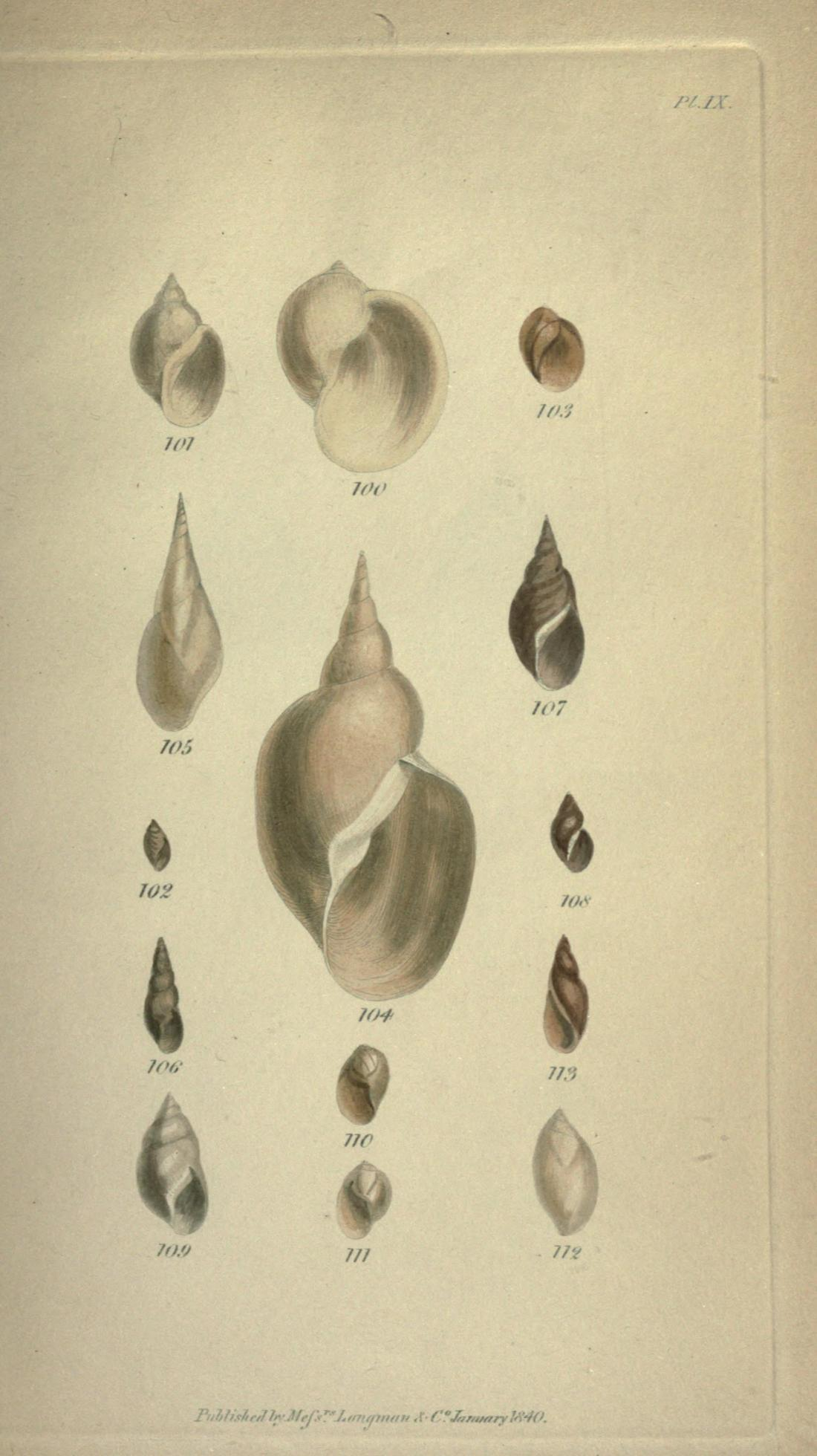 Plate IX, figures 101 through 112. Page 343.