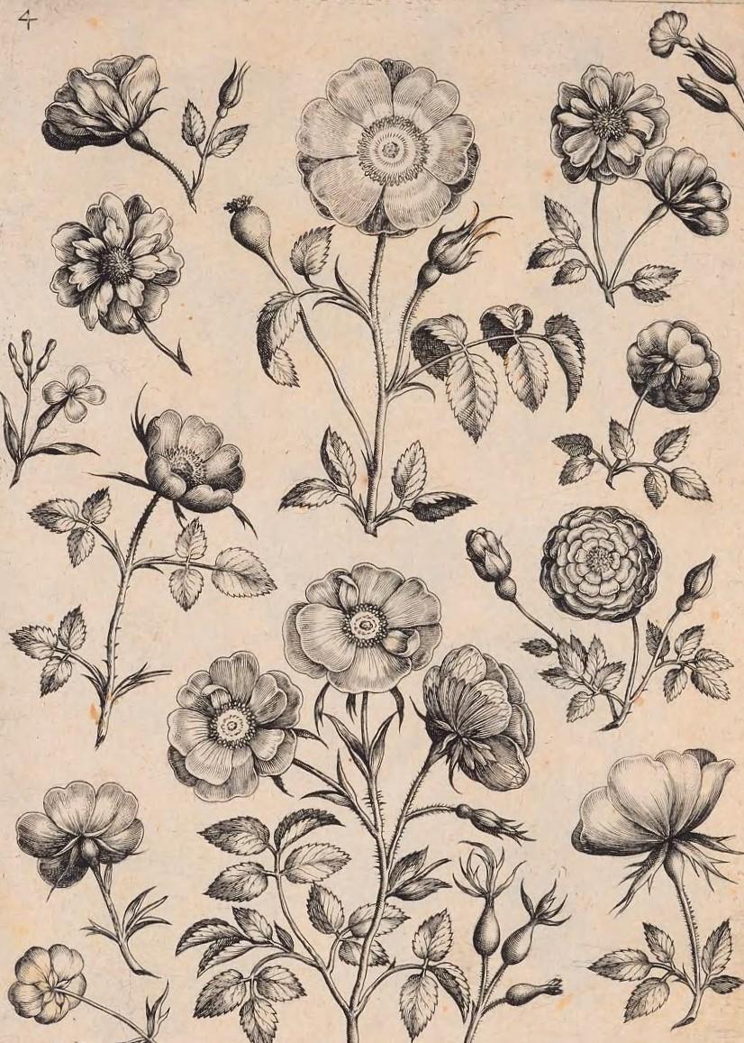 florilegium00coll_0011
