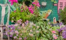 The Colour Garden
