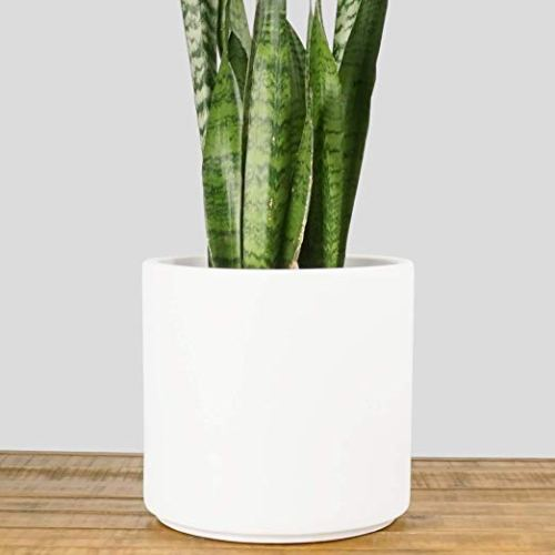 white planter