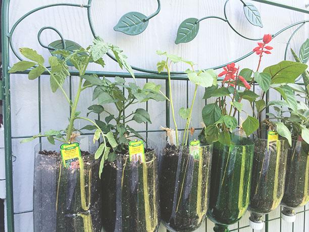 How to build a diy vertical garden for cheap