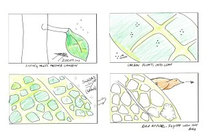 Storyboard 2 - trees absorb carbon to grow
