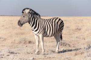Etosha-National-Park2-Namibia