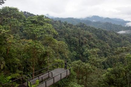 Mashpi-Cloud-Forest-Ecuador-2