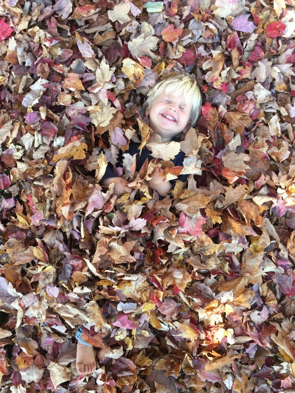 Maine in the Fall Leaves Tommy picture