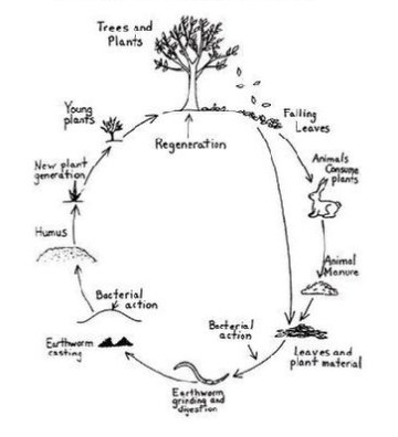 "Swedenborg's ""Circle of Life"""
