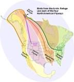 Migration_Flyways1