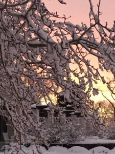 sarah hale folger snow tree - Sarah Hale Folger.snow tree
