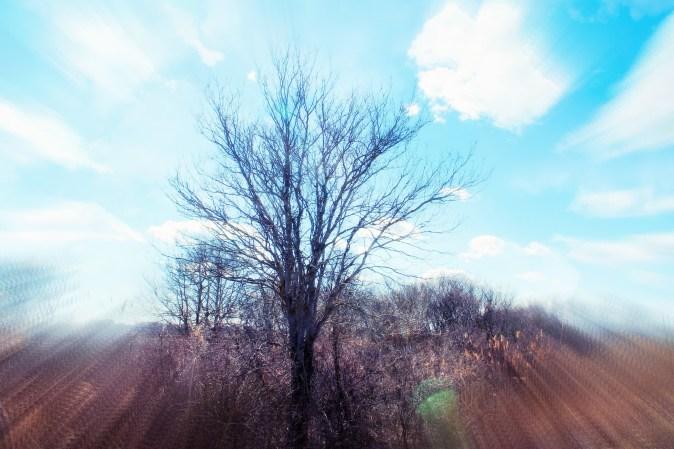Sarah Hale Folger.tree
