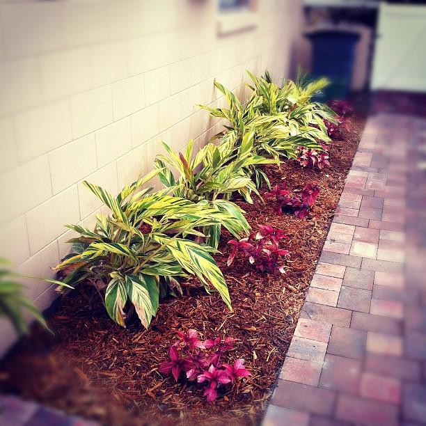 side yard florida landscraping