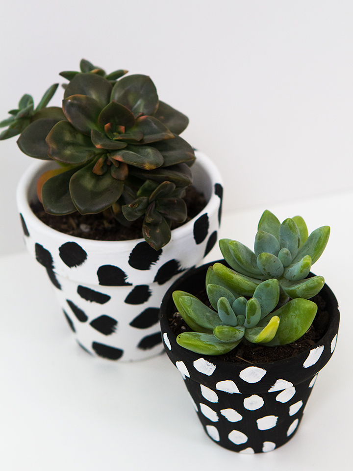 Create your own spotted terra cotta pots! Click through for a video tutorial.
