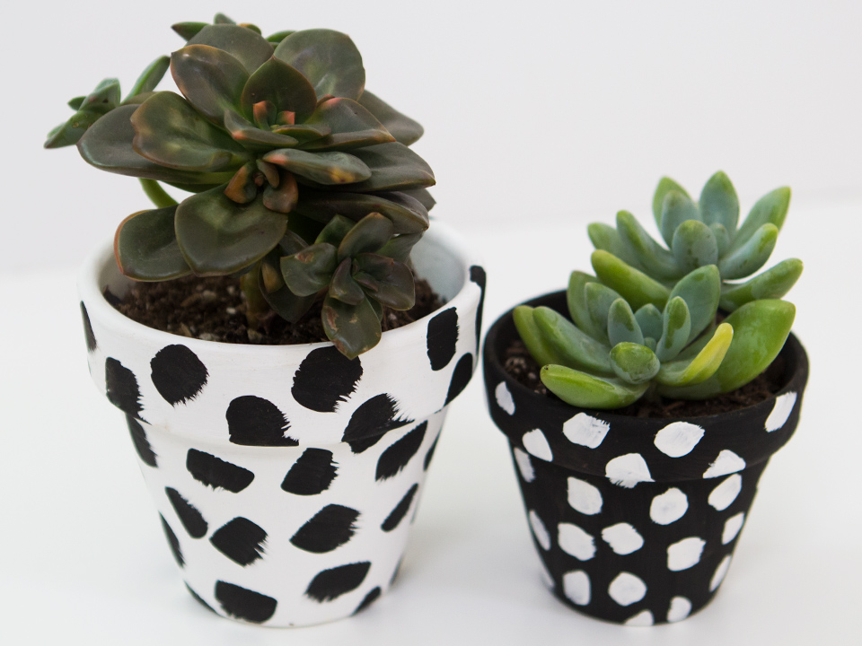You don't need to be an artist to create these mod spotted pots! Click through for a video tutorial.