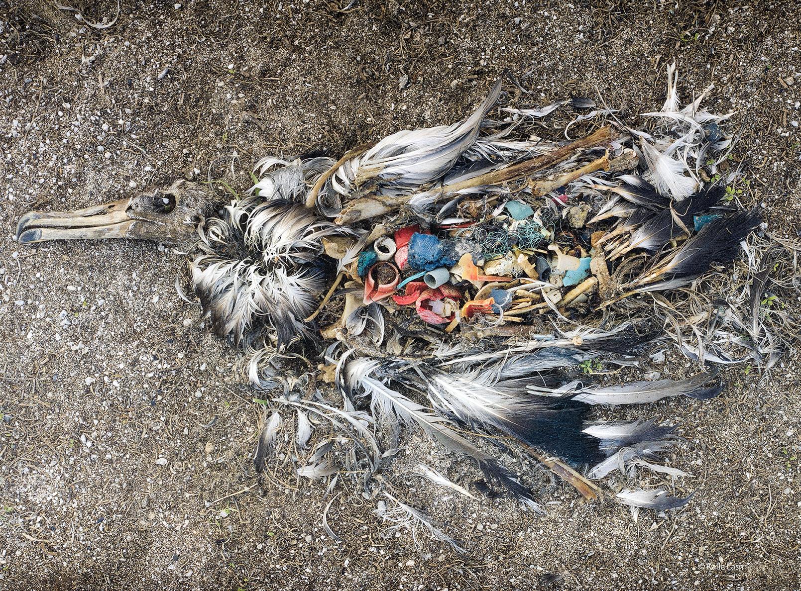 Why the Anthropocene?