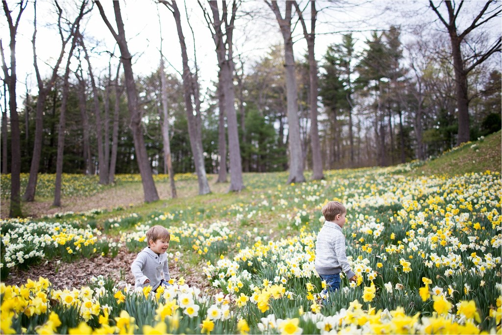 Daffodil field in Southern Maine Family Photographer