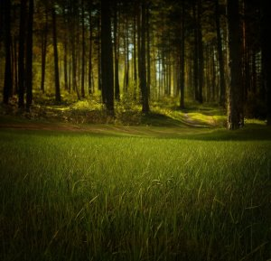grass, trees, forest