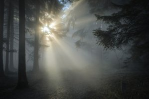 sunbeams, forest, fog