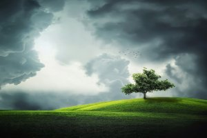 tree, summer, beautiful