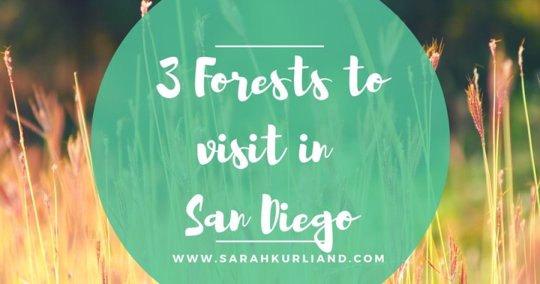 3 Forests to Visit in San Diego