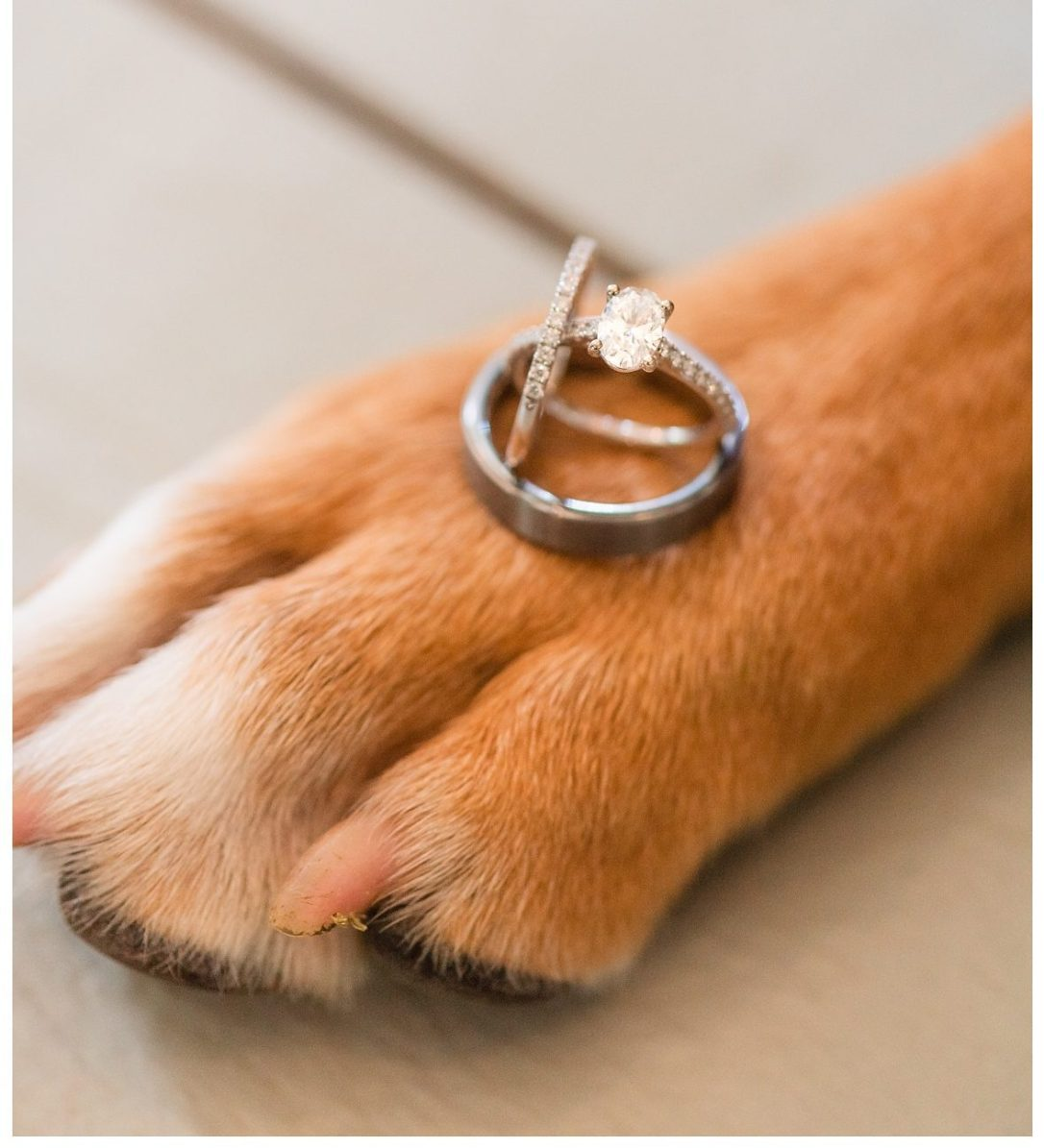 Chattanooga photographer who loves animals with wedding rings balanced on dog paw