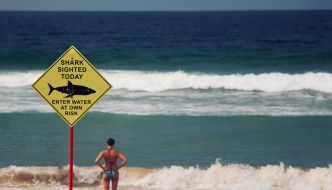 woman staring at shark infested waters