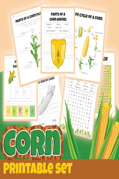 corn unit study