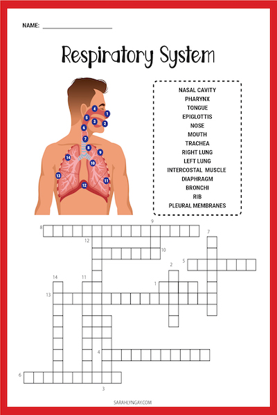 lung terminology