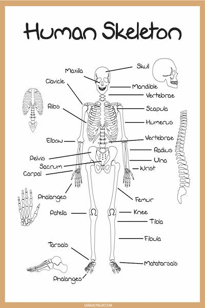 skeleton terms