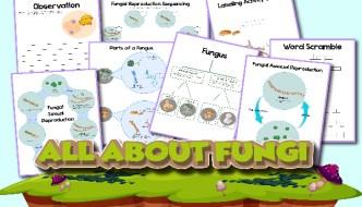 Life Cycle of Fungi