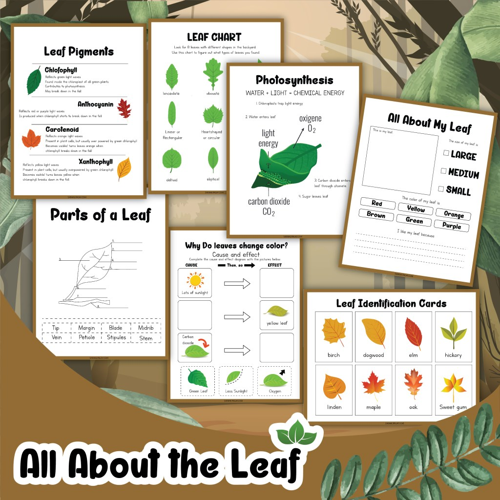 all about the leaf
