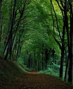 Into the deep, dark forest. Near Heidelberg, Germany