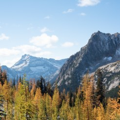 golden larches in the foreground, mountains in the background