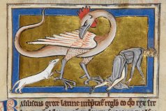 Basilisk in British Library Royal MS 12 C XIX , f. 63.