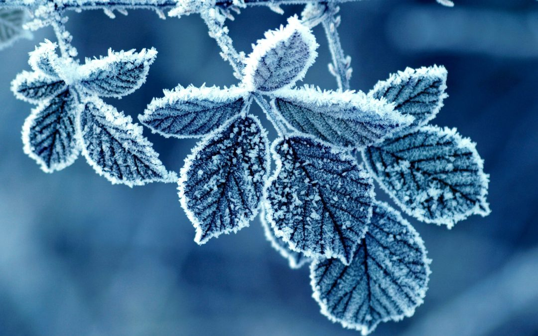 Winter Remedies for Mood, Foods and Sickness