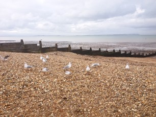 Whitstable birds seagulls Kent seaside sea ocean beach