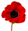 Remembrance Day 2014